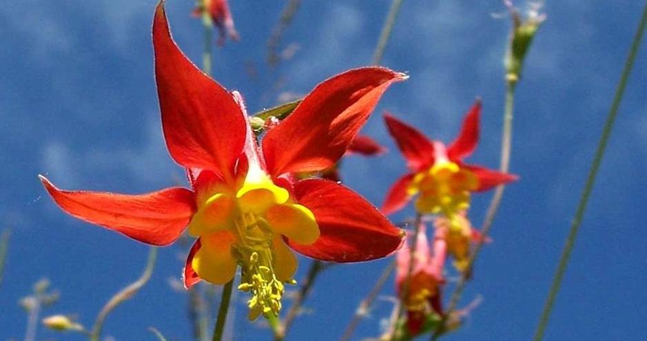 Floresencial